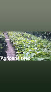 Fundó AGRIPERIA