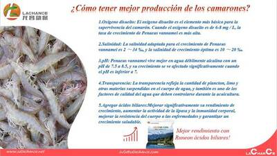 Los ácidos biliares mejoran el rendimiento del cultivo de camarón
