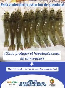 Los ácidos biliares mejoran la salud de los camarones