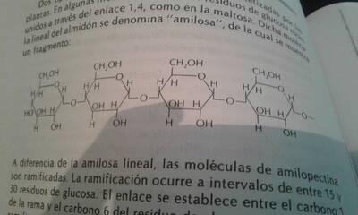 Amilooectina