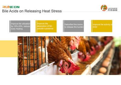 Los ácidos biliares pueden mejorar la capacidad anti-estrés.