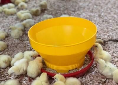 Higiene del comedero de pollito