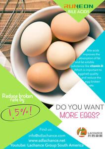 ¡Los ácidos biliares reducen la tasa de rotura de huevos en un 1,5%!