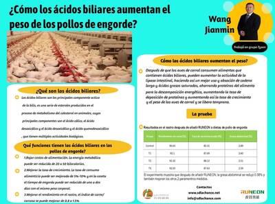 Cómo los ácidos biliares aumentan el peso de los pollos de engorde?