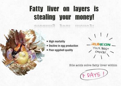 Los ácidos biliares resuelven el problema del hígado graso de las gallinas ponedoras en 7 días