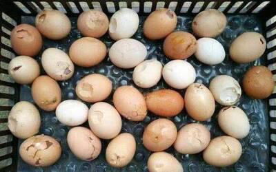 Huevos rotos por la enfermedad del hígado