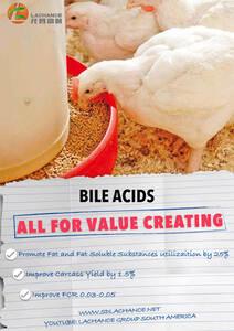 Los ácidos biliares mejoran el crecimiento de los pollos de engorde