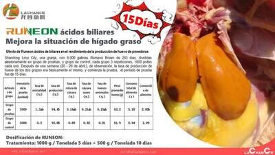Acidos biliares mejora el rendimiento de las ponedoras