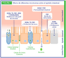 Efecto de las micotoxinas en la salud intestinal