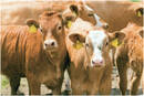 Artículo: Bienestar animal: aspectos importantes