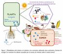 Nitratos en forrajes de lecherías especializadas: ¿Cuál es la magnitud de la contaminación y qué problemas nos pueden causar?
