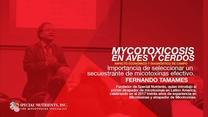 Importancia de seleccionar un secuestrante de micotoxinas efectivo en avicultura