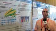 Nutrición en Pollos, Ensayos de Fertilización en Maíz