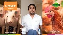 Estrés calórico en aves y cerdos en Latinoamérica
