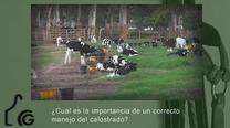 Importancia de un correcto manejo del calostrado, Ignacio Vidaurreta