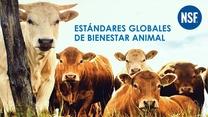 Bienestar Animal: Estandares Globales