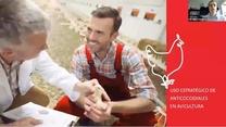 Uso estratégico de anticoccidiales en producción avícola