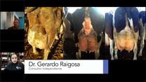 Estrés oxidativo en vacas en transición, Dr. Gerardo Raigosa