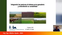 Integrar pastura en el sistema arroz-ganadería