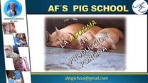 La Lisozima en producción porcina