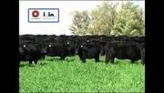 Pasto natural en el periodo de entore. Marcelo Pereira (IPA)