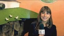 Beneficios de la xilanasa Econase XT 25 de AB VISTA. Carmen Maria Zabala (ADITMAQ)
