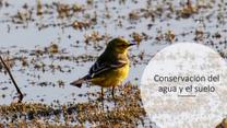 Conservación del agua y del suelo