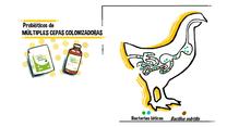 Conozca los probióticos de la línea Colostrum® de Biocamp