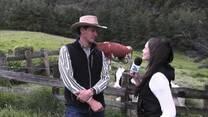 Producción de Holstein en Ecuador