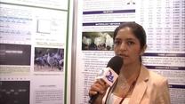 Primera evidencia de fowl adenovirus tipo IV en paloma en Perú