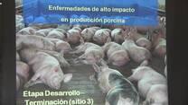Enfermedades de alto impacto en producción porcina