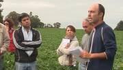 Fertilización en planteo Soja-Soja. Gustavo Ferraris (INTA)