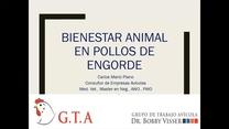 Bienestar en pollos de engorde: Mario Plano
