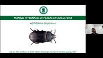 Manejo Integrado de Plagas en avicultura: Alphitobius diaperinus