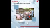Suplemento alimenticio para salud intestinal en cerdos - DUALPROT