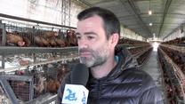 Premezclas a medida para gallinas ponedoras, Nelson Olocco Diz