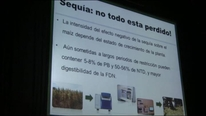 Impacto de la sequía sobre la planta de maiz. Oscar Queiroz.