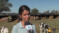 Experiencia a campo: Utilización de Bioinnovo Terneros en guachera
