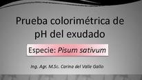 Prueba colorimétrica de pH del exudado: Carina Gallo (INTA)