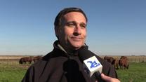 Remate de reproductores bovinos de Cabañas Fortín Quieto