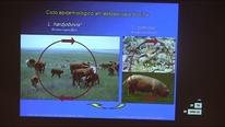 Enfermedades que impactan en la reproducción. Fernando Dutra
