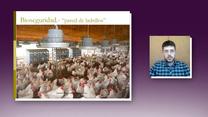 Bioseguridad en producción avícola: Santiago Cura
