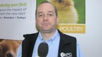 Resposta imune eficaz e maior desempenho em frangos com plasma