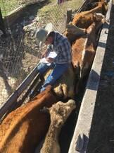 Manejo de ganado