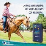 DSM ANIMAL NUTRICION CEL:438 112 41 37