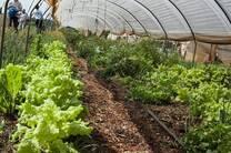 Tunel de hortalizas con tratamiento de probioticos