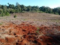 Situacion inicial en lote con presencia de hormigas cortadoras