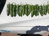 Chiles con Viusid Agro