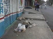 Animales callejeros