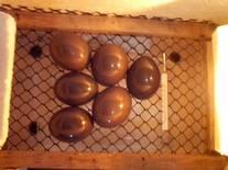 ovos de perdiz